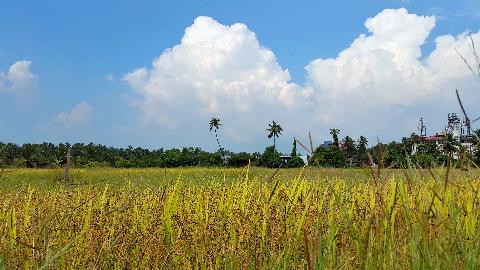 Goa Agriculture
